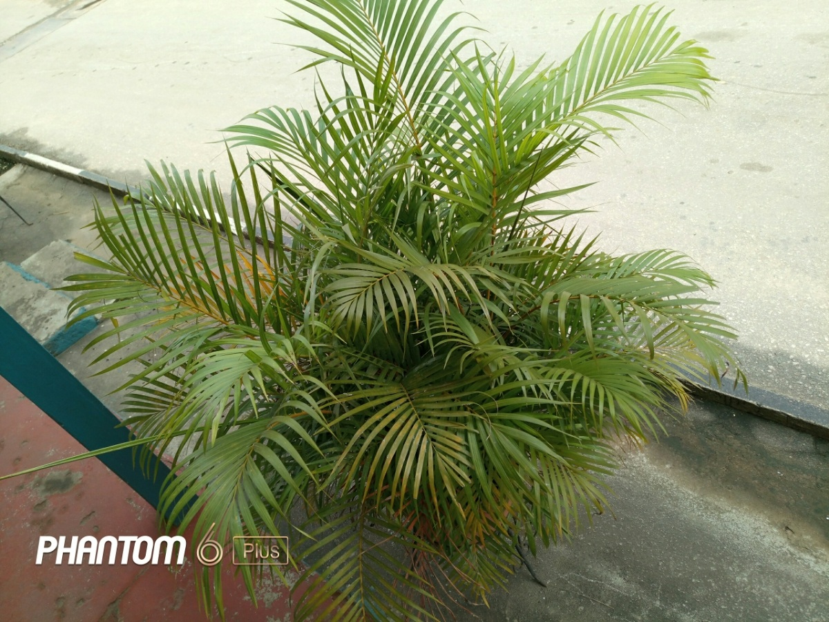 fetch?id=68527&d=1478249993&type=large - Lovely images taken with the Tecno phantom 6 plus